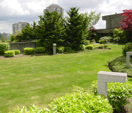 3970 Carrigan Court Landscaping!