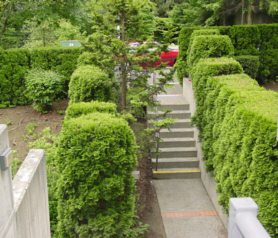 3980 Carrigan Burnaby Landscaping!