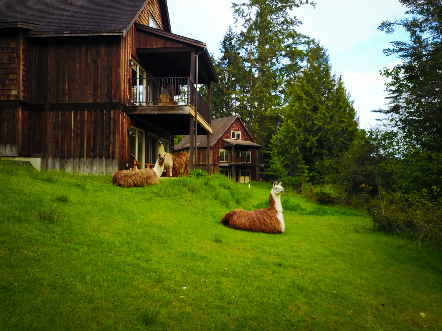 The Cottages With LLamas!