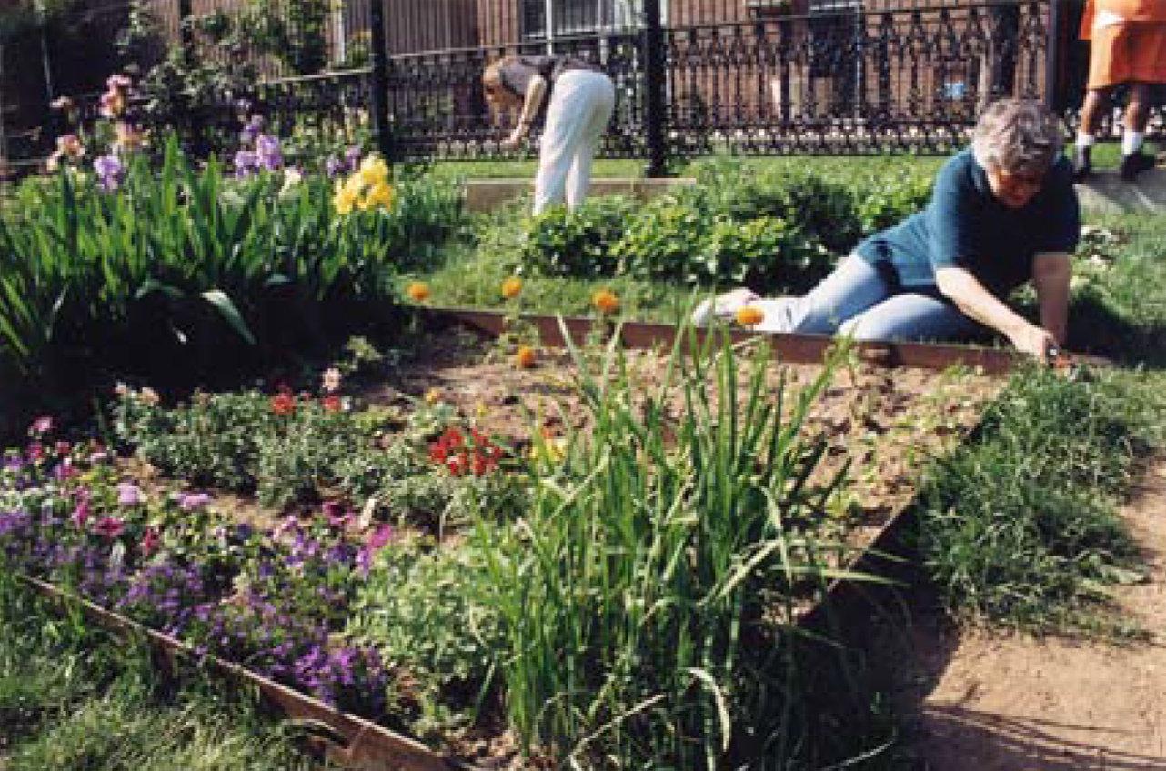 Arbutus Urban Garden!