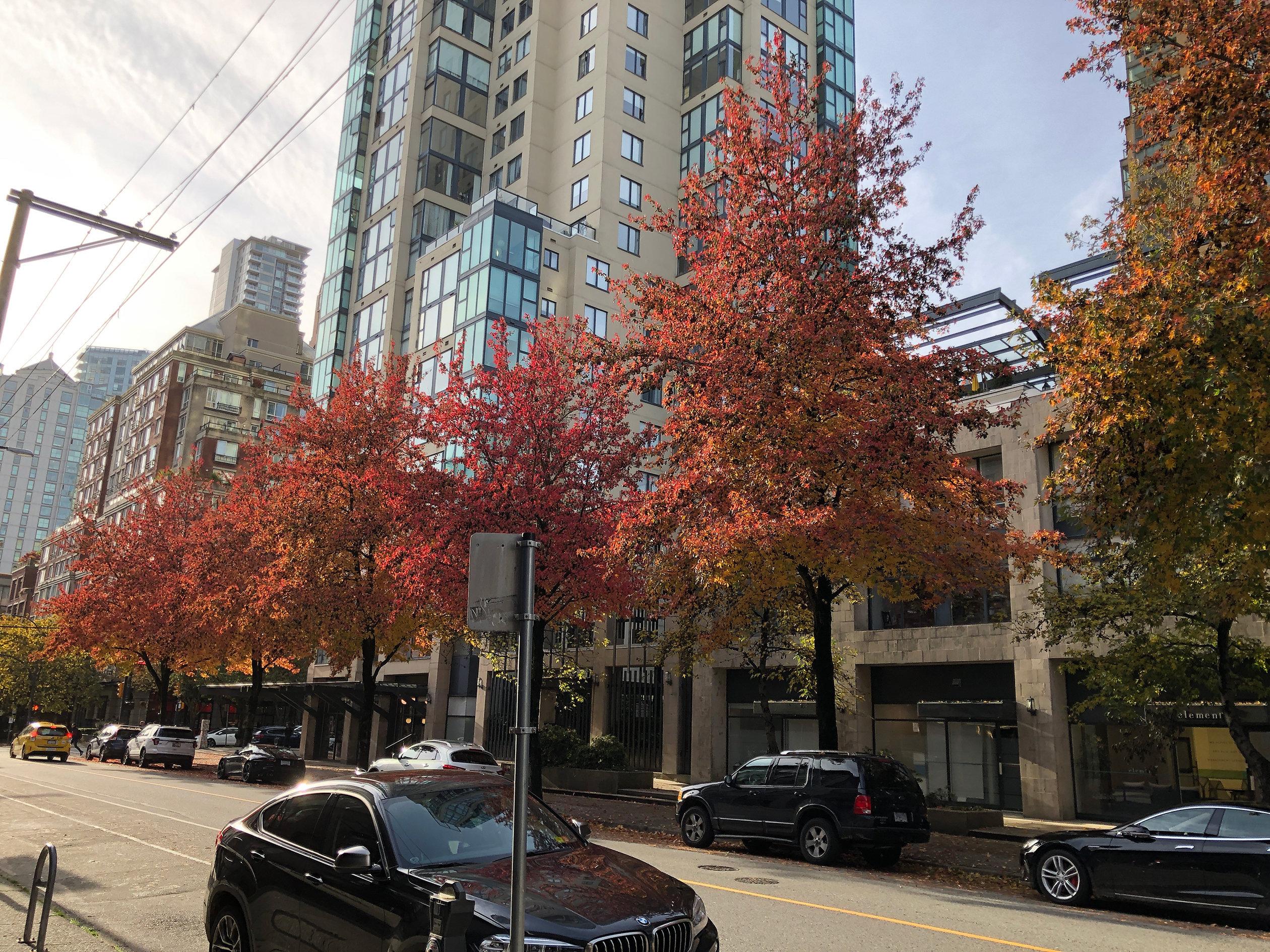 City Crest in Autumn!