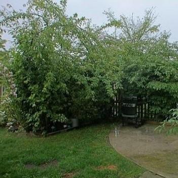 The backyard !