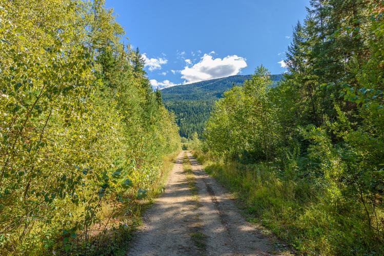 forestryroad4.jpg!